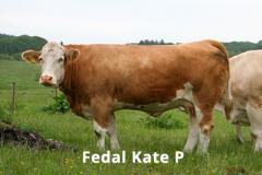 Fedal Kate P (Lykke Eminent P x Vingegaard Texas)