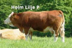 Holm Lilje P (Holm Hannibal P x Søgård Amir)