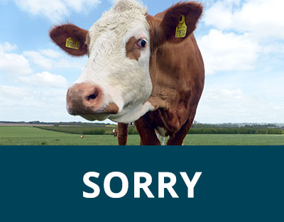 Currently no cows for sale Image